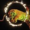 Цирки в Вышкове