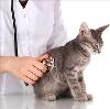 Ветеринарные клиники в Вышкове